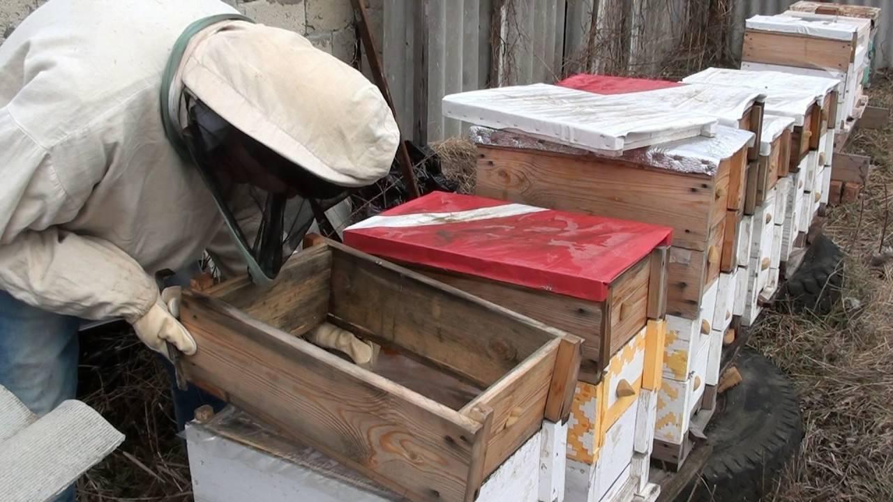 Подготовка пчел к зиме: кормовые запасы, сборка гнезда, утепление, зимовка на улице и основные ошибки - видео