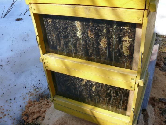 Как правильно утеплить улей для зимовки пчел на улице