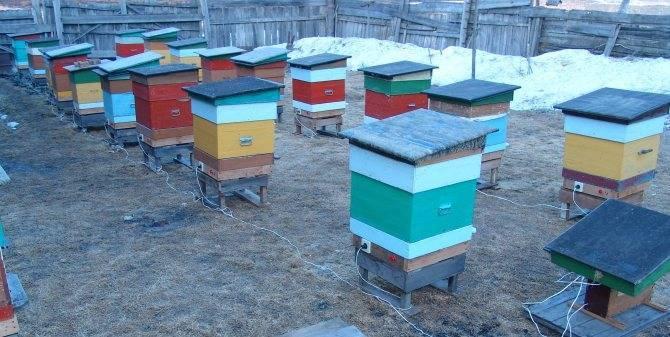 Особенности зимовки пчёл на улице в разных регионах