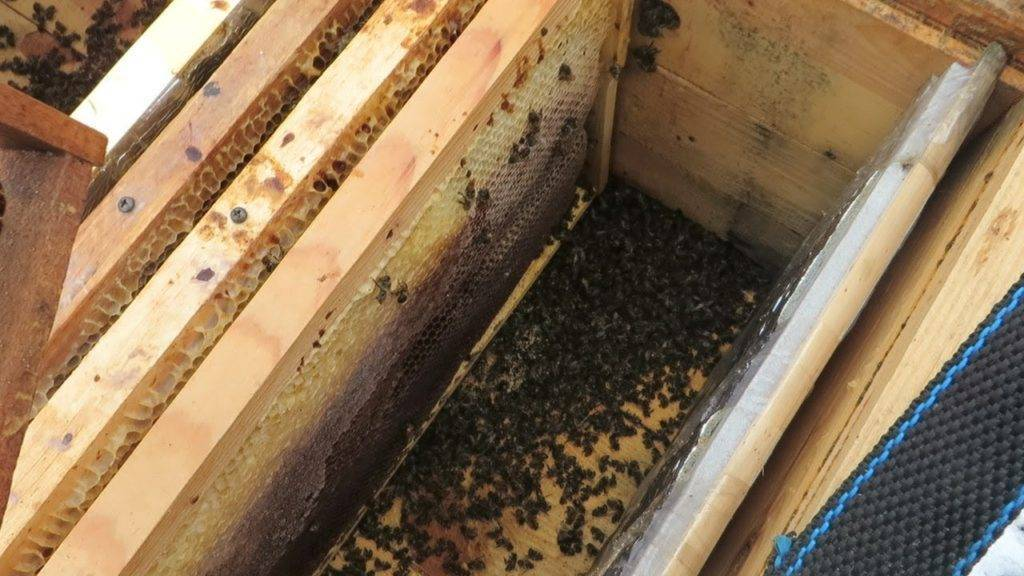 Зимовка пчел: виды, как осуществляется в подмосковье и сибири, подготовка пчел осенью