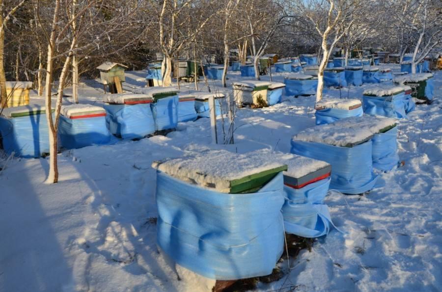 Зимовка пчел на улице в средней полосе россии, подготовка, достоинства и недостатки