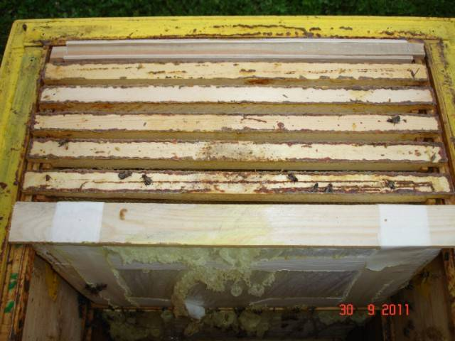 Зимовка пчел: сравнение зимовок ульев на улице