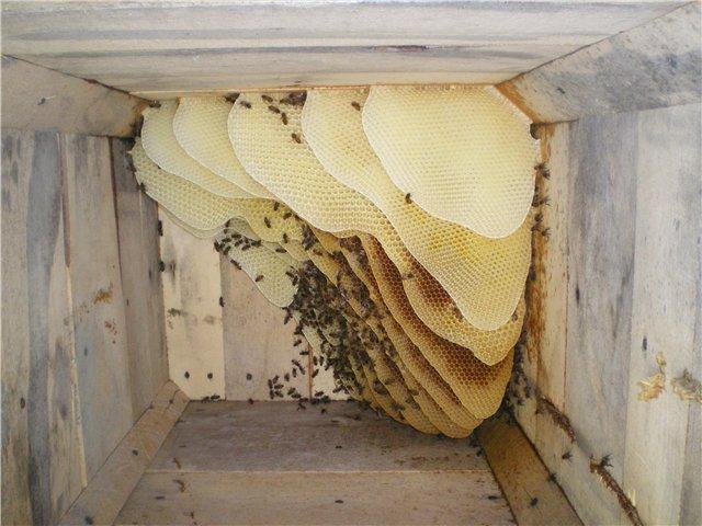 Как зимуют пчелы - утепление ульев для зимовки (фото + видео)