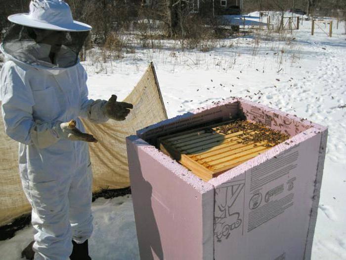 Правила и условия зимовки пчел на улице