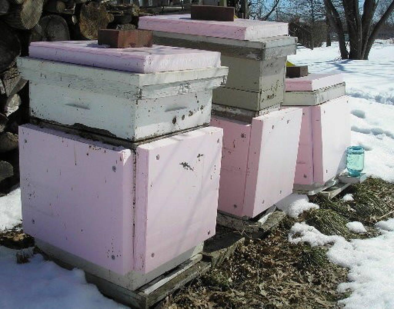 Подготовка пчел к зиме – этапы подготовки и видео