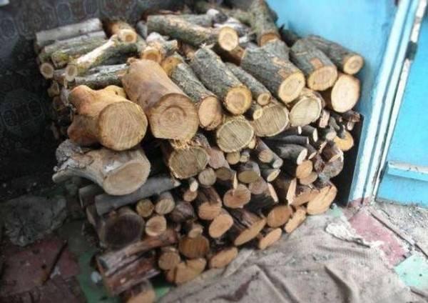 Сырые дрова: как разжечь, можно ли топить печь?