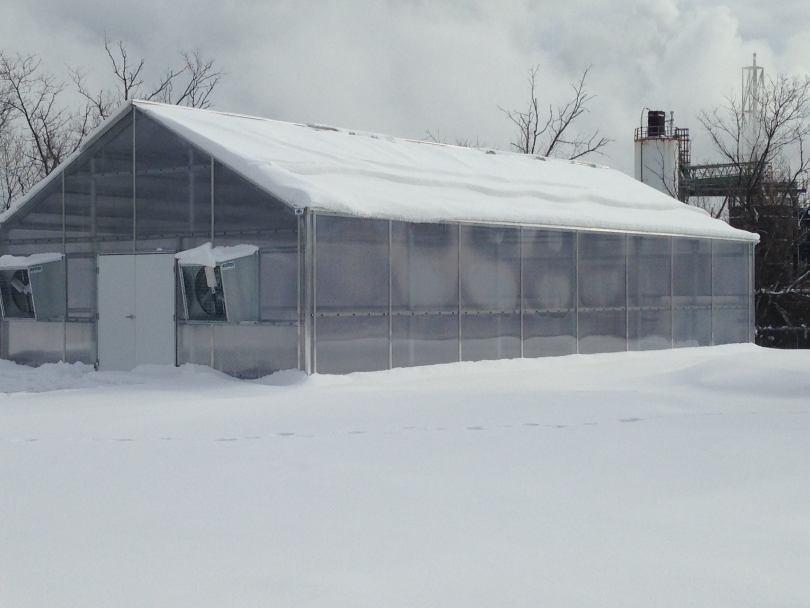 Подготовка теплицы к зиме - подробная пошаговая инструкция!