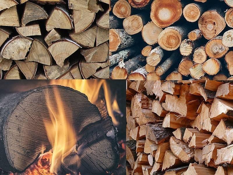 Какие дрова самые жаркие – методика правильного подбора дров в разных целях